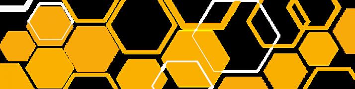 Pierzga pszczela